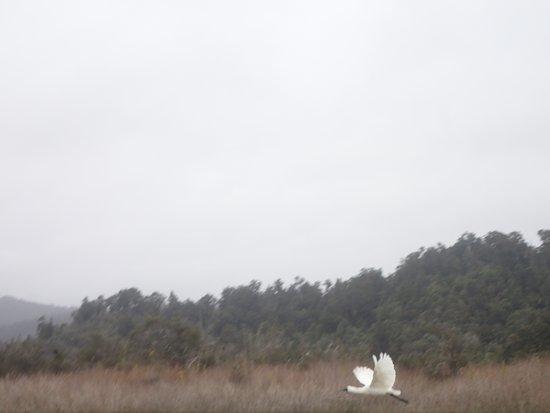 Okarito Kayaks: Spoonbill?