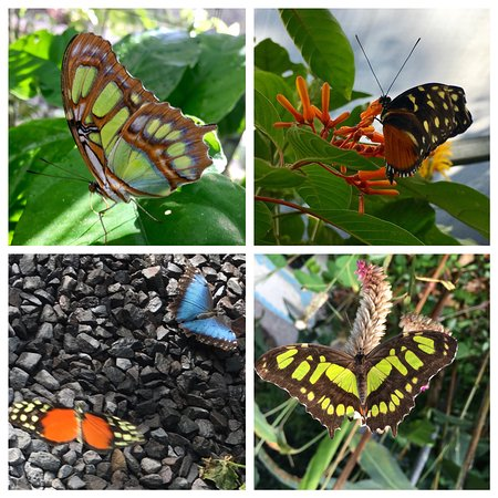 Butterfly Haven : some of the butterflies at Butterfly's Haven