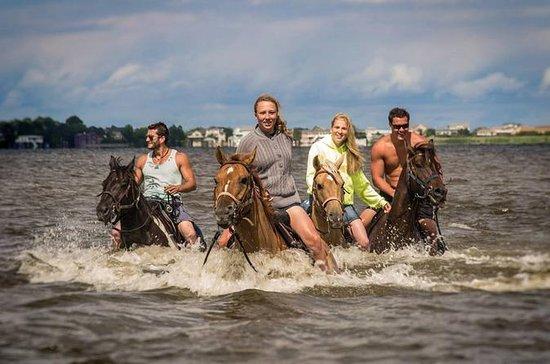 Outer Banks Horseback Ride