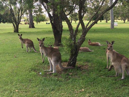 Mareeba, Австралия: photo1.jpg