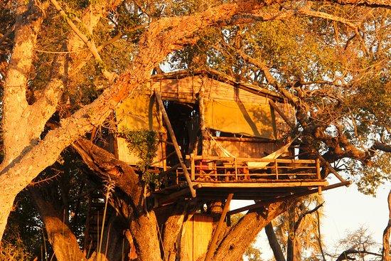 Delta Camp: tree house