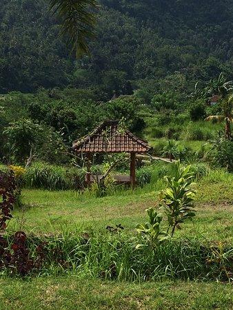 Warung Telaga Sidemen: photo1.jpg