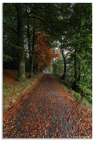 Bailieborough, Ирландия: Castle Lake walk in Autumn