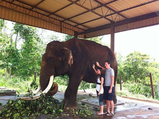 Elephant Orphange in Pinnawala