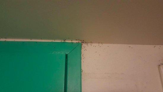 Mooloolaba Beach Backpackers: ants in the bathroom