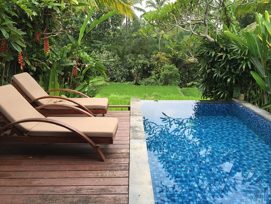 Ubud Green Picture