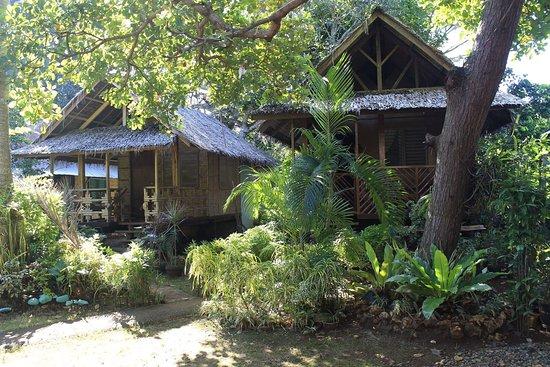 Sheena's Cottage Garden
