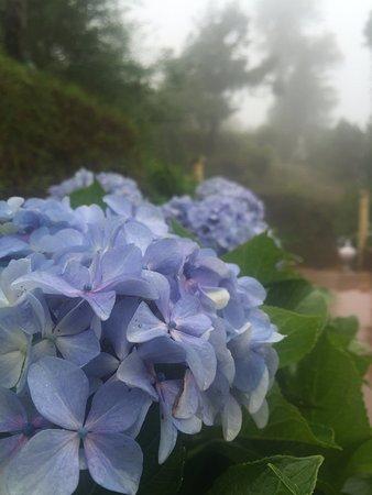 Foto de Te Aroha Dhanachuli