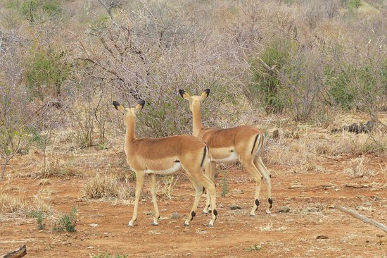 Tau Game Lodge: Beautiful impressions of Madikwe Game Reserve