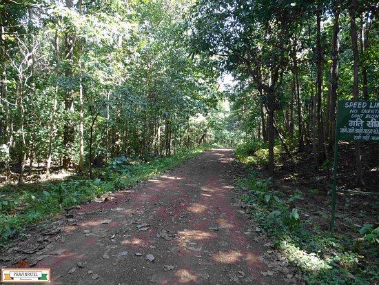 Jagdalpur, الهند: #KangerVally, #Tirathgarh, #Jagdalpur, #Bastar, #CGTourism, #Chattisgarh