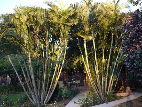 Rinconcito Lodge: Une vue du jardin