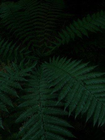 Redwoods, Whakarewarewa Forest: photo1.jpg