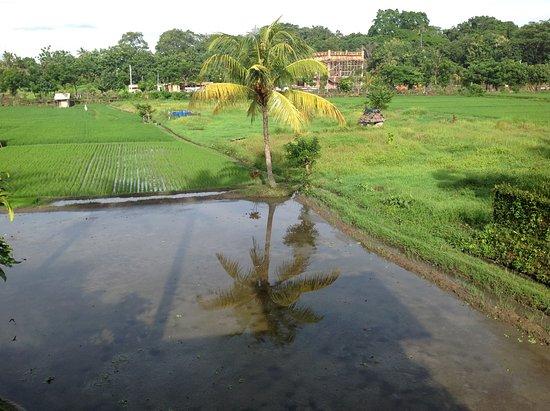 Tegal Sari: 逆さ椰子の木