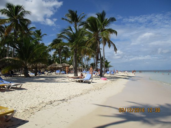 Beach At The Hotel With Lots Of Palm Trees Picture Catalonia Resort Bavaro Golf