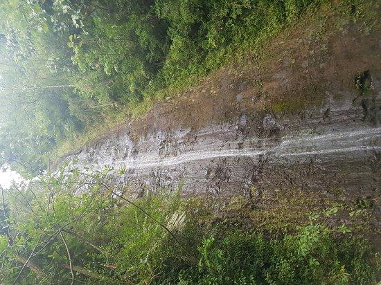 Manoa Falls : trail