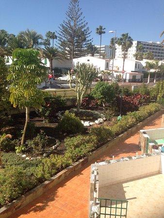 Las algas playa del ingl s spanien omd men tripadvisor - Apartamentos calma playa del ingles ...