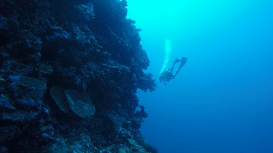 Diving at the Astrolabe Reef
