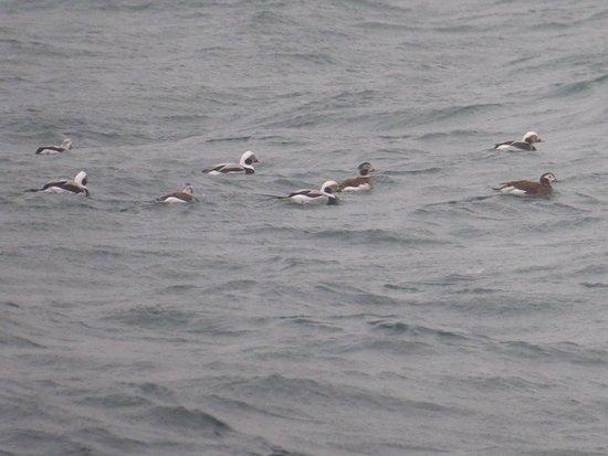 Shetland Wildlife: photo1.jpg