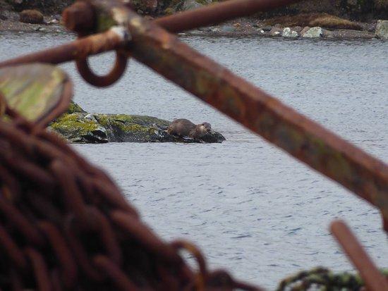 Shetland Wildlife: photo2.jpg