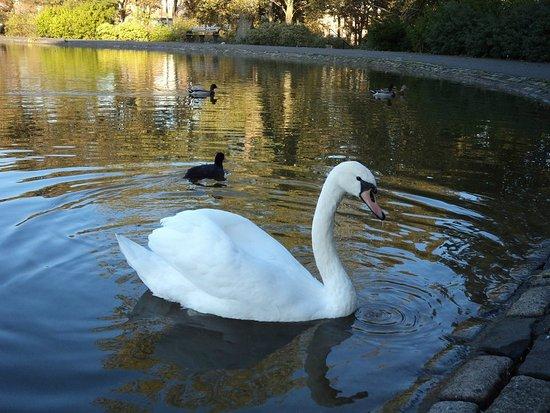 Leazes Park: Ducks
