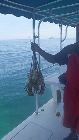 Belcampo Lodge: Catch of the day for Snorkel with a Chef