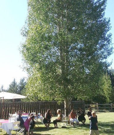 La Pine, OR: Lawn area has shady aspens and is easily accessible for caterers for events.
