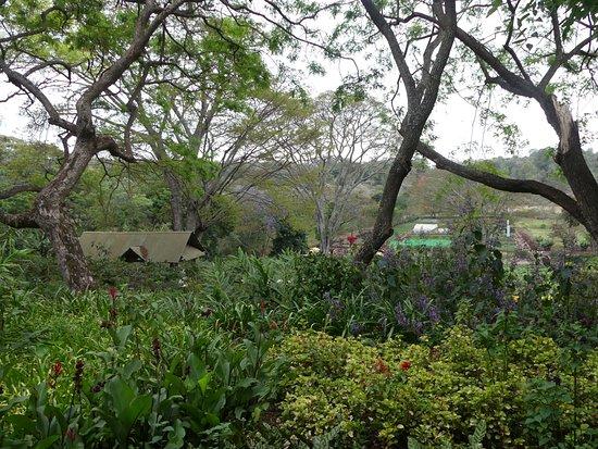 Gibb's Farm: Gibbs's Farm garden view from our room