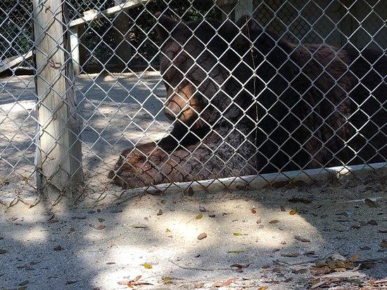 Octagon Wildlife Sanctuary And Rehabilitation Center: photo3.jpg