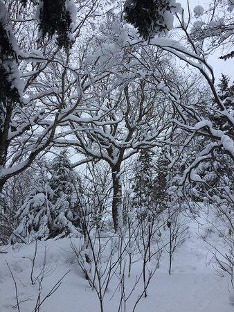 Notre Dame des Bois, Canada: photo3.jpg