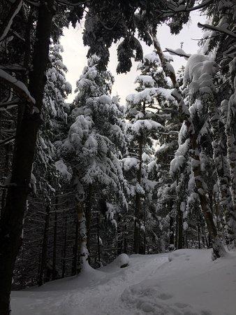 Notre Dame des Bois, Canadá: photo9.jpg