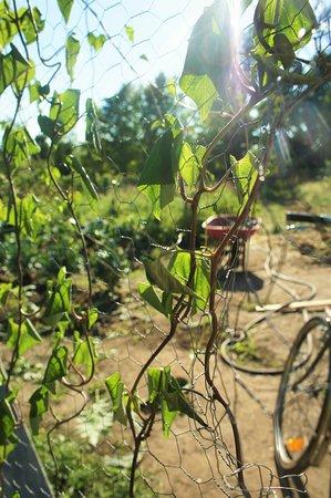 Mississippi Mills, Canada: Organic garden