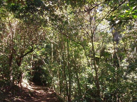 Reserva Bosque Nuboso Santa Elena Photo