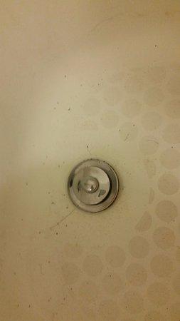 Charleston, WV: Filthy shower upon arrival