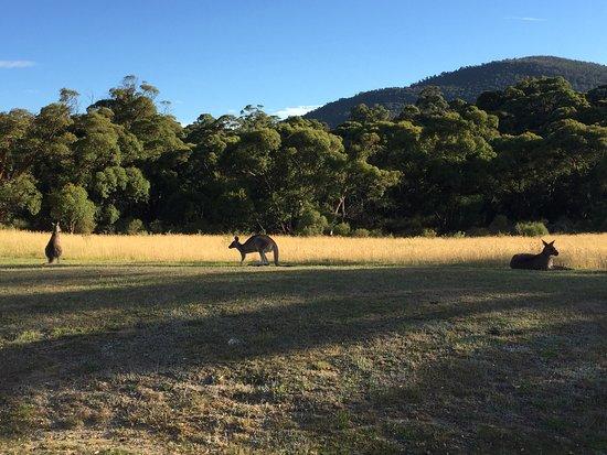 Crackenback, Australien: photo1.jpg