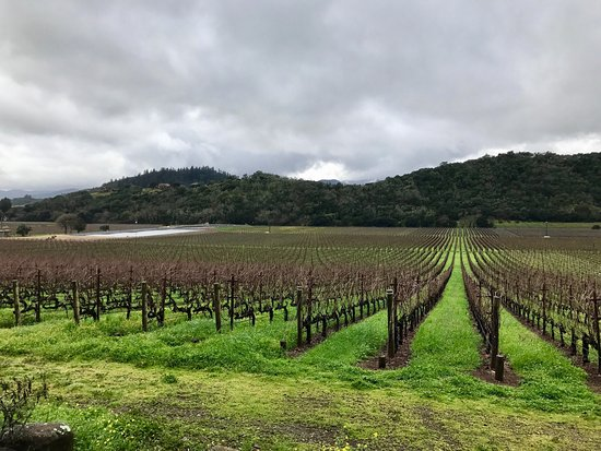 Stags' Leap Winery : Beautiful, well manicured, historic, and picturesque vineyard tucked away a couple of minutes of