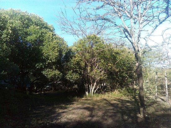 Wajee Mara Camp : A morning at waker mara camp