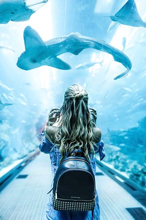 Dubaï, Émirats arabes unis : Dubai Aquarium and Underwater Zoo -