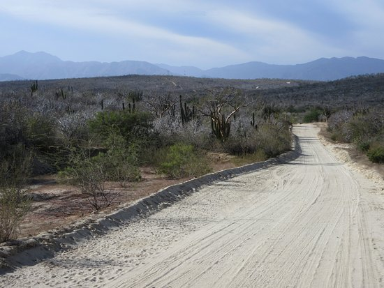 Santiago, المكسيك: Sierra de la Laguna 5