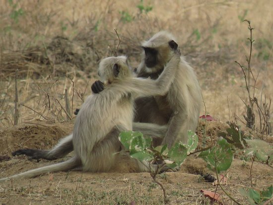 Kolara, India: Safari at the park