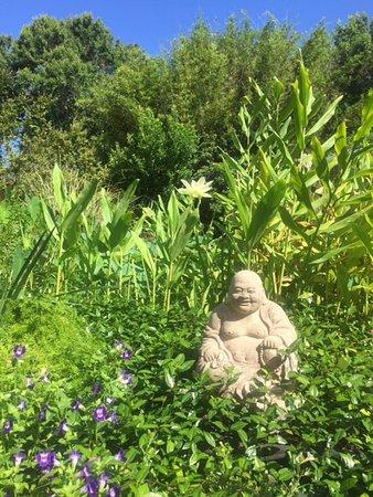 Zen Life International Yoga & Wellness Center