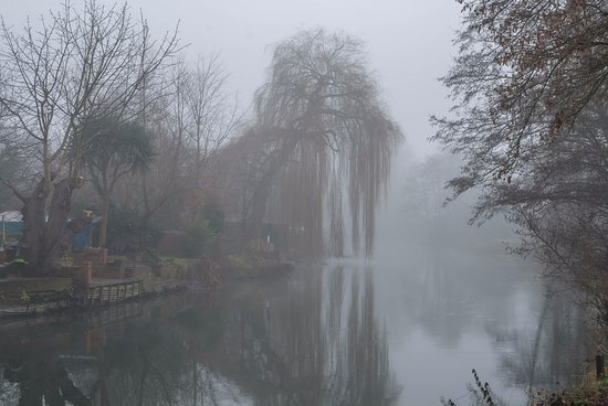 Kennet & Avon Canal: Foggy day on the Kennet behind Elgar Road Reading