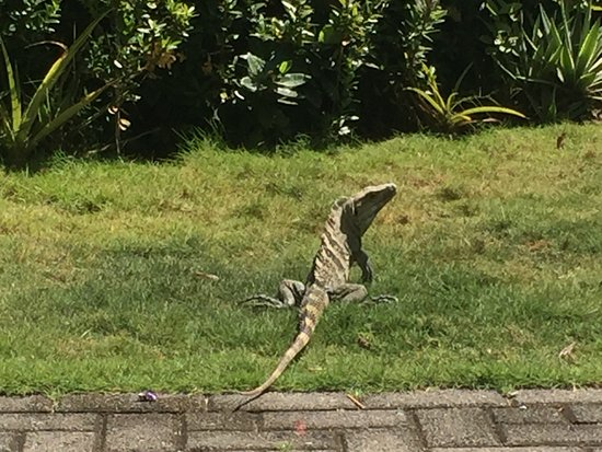 """هوتل فيستا باسيفيكو: Lots of cute """"lizards"""""""