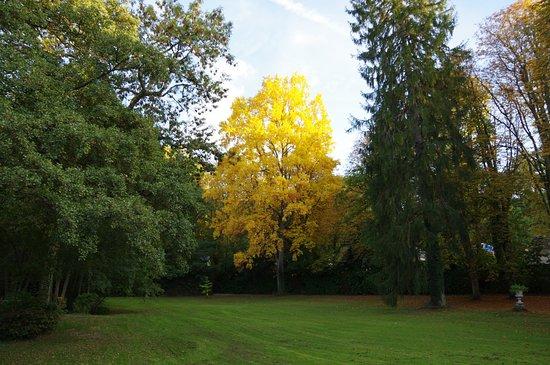 Larcay, France: Vue sur le parc et les arbres