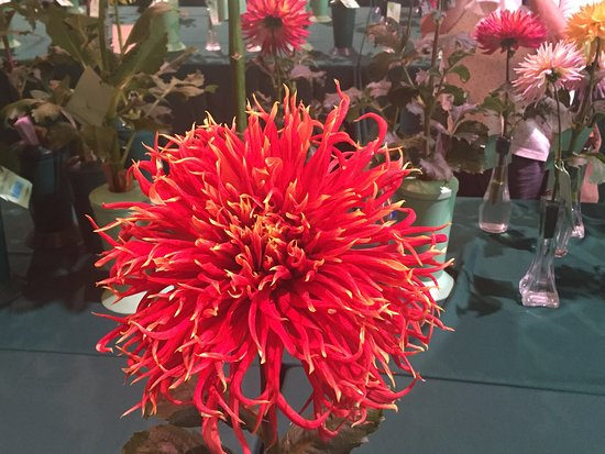 Kennett Square, PA: Special Flower Competition (Indoor) at Longwood