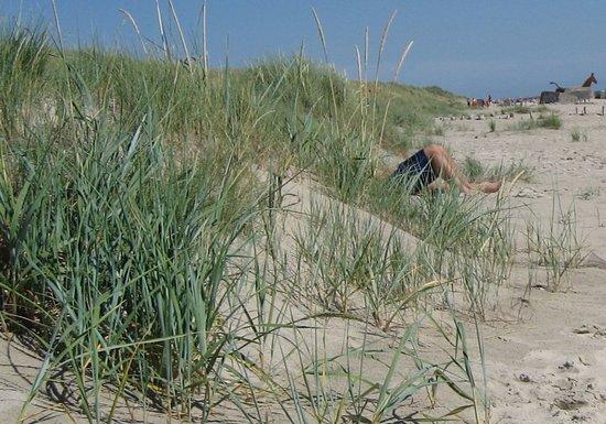 Blaavand, Denmark: Sommerdag på Blåvand Strand