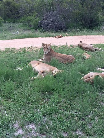 Savanna Private Game Reserve: In Sabi Sands Private reserve is where Savanna is situated . The wildlife you see here is amazin