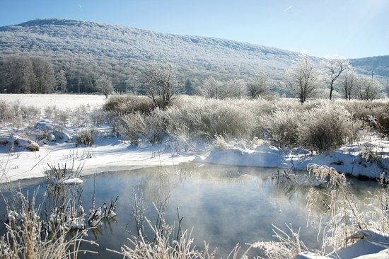 Timberline Four Seasons Resort: One of the many wildlife sanctuaries in the Canaan Valley