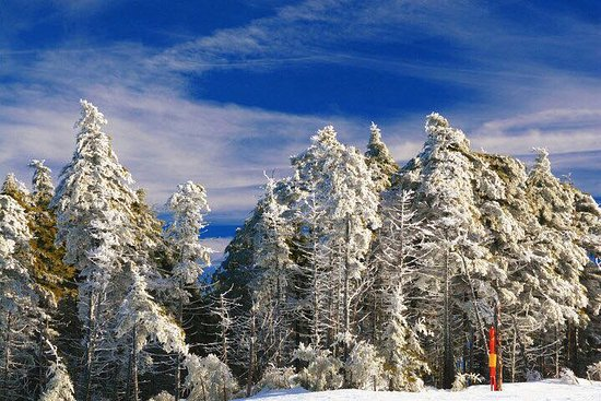 Timberline Four Seasons Resort: Blue Skies and snowy trees at the top of Herz Mountain