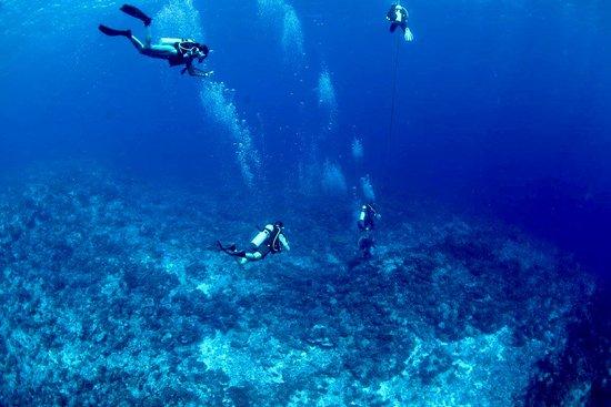 Manihi, Polinezja Francuska: Descente dans le bleu de la passe