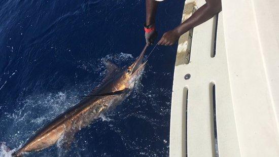 Stanley's Deep Sea Fishing: photo5.jpg